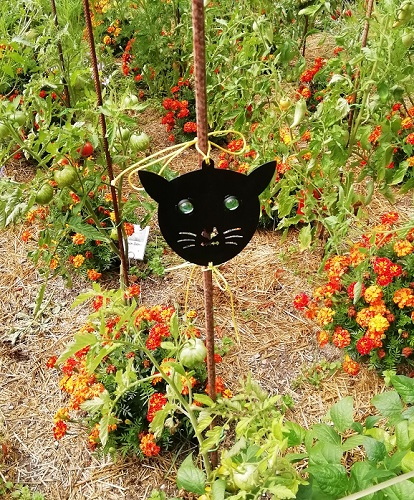 chat en surveillance pour protéger les plants de tomates
