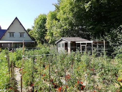 Protéger les plants de tomates, partie II