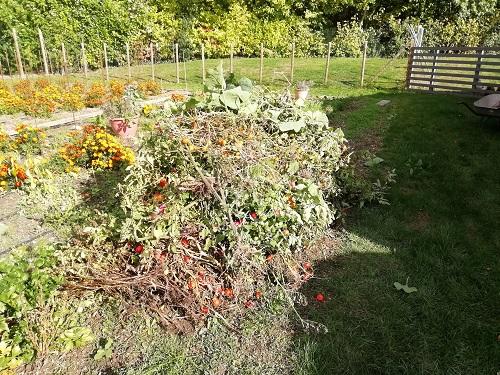 tas de plants de tomates arrachés