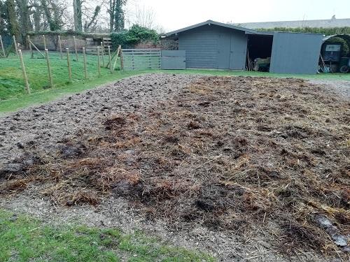 fumier de cheval étalé pour amender le jardin