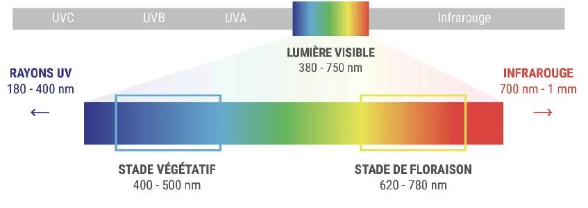 spectre lumineux pour nouvelle enceinte de culture