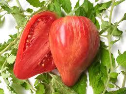 LTS pour préparer la plantation des tomates