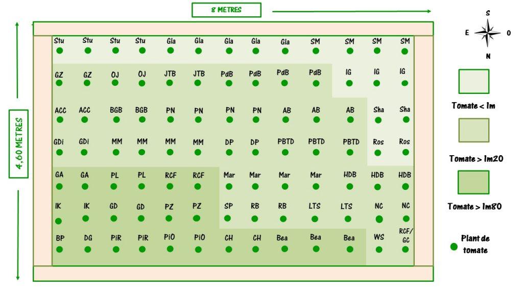 plan de jardin pour préparer la plantation des tomates
