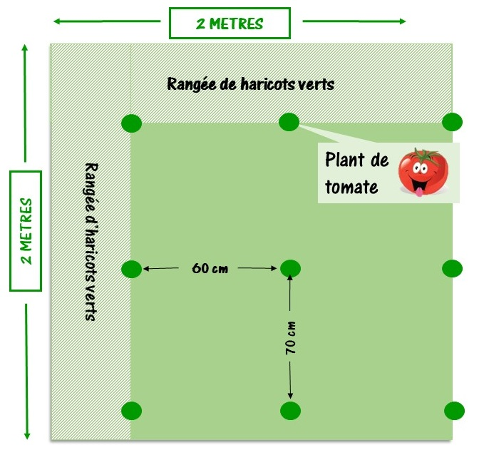 espace entre les tomates pour préparer la plantation des tomates
