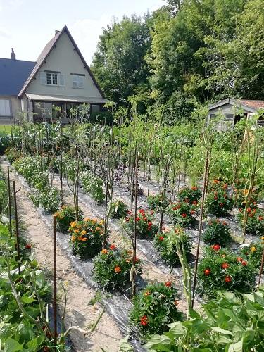 jardin mildiou a