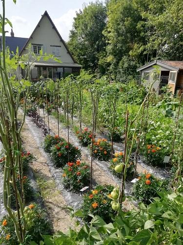 jardin mildiou b
